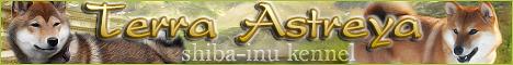 Питомник Сиба-ину Терра Астрея